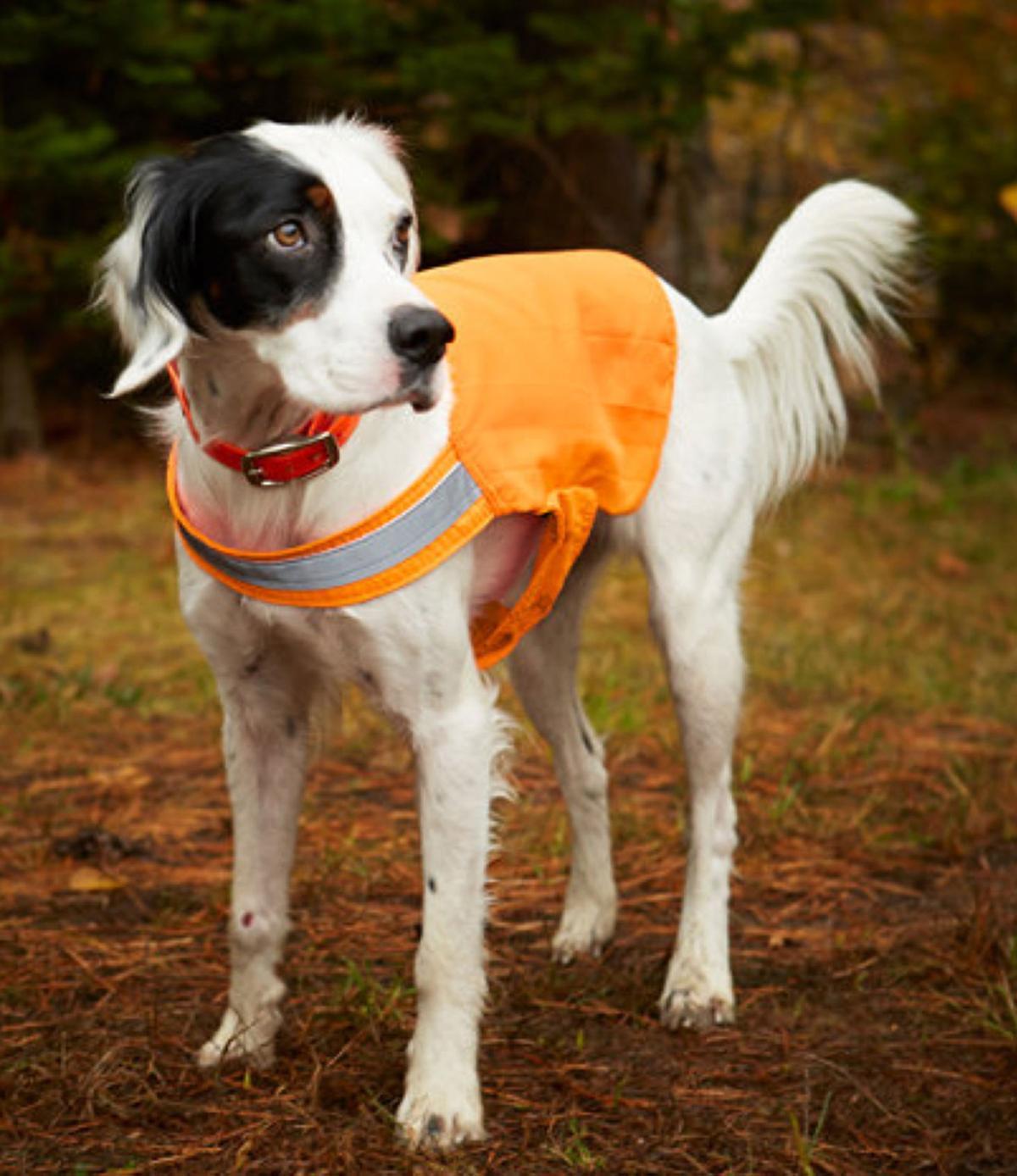 L.L. Bean No Fly Zone Dog Vest