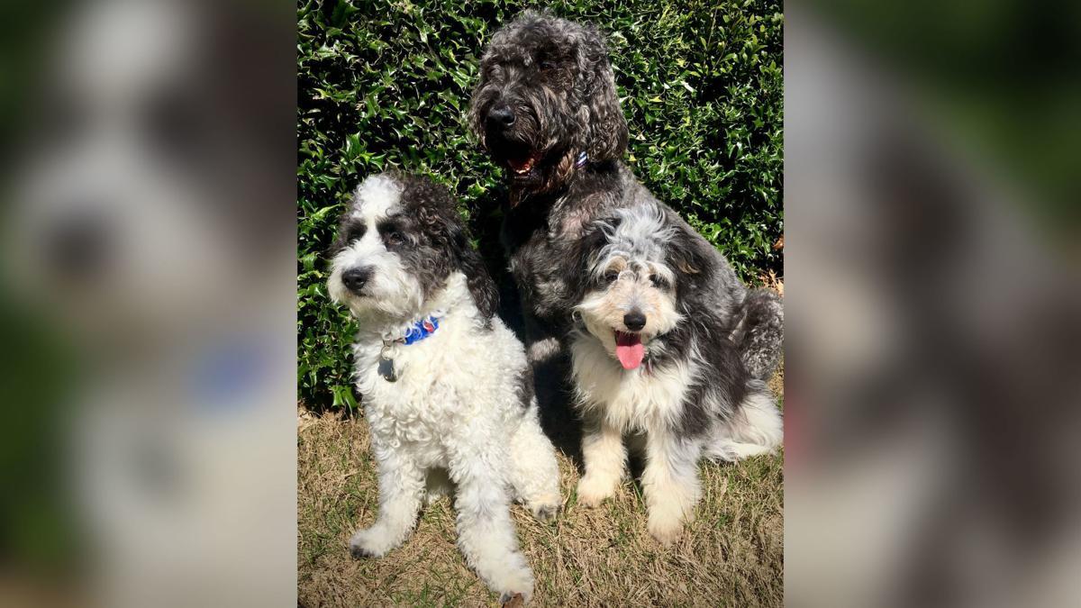 Christy Mitchell's pets