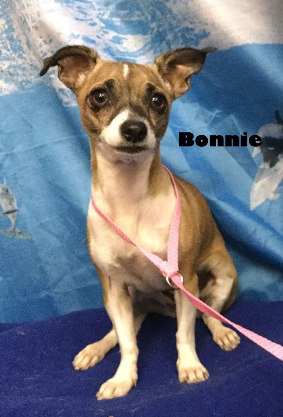 Take me home Bonnie