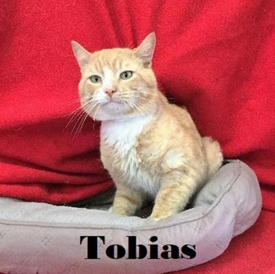Take me home Tobias
