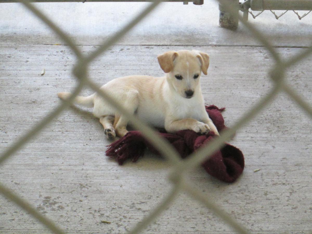 Small SPCA dog