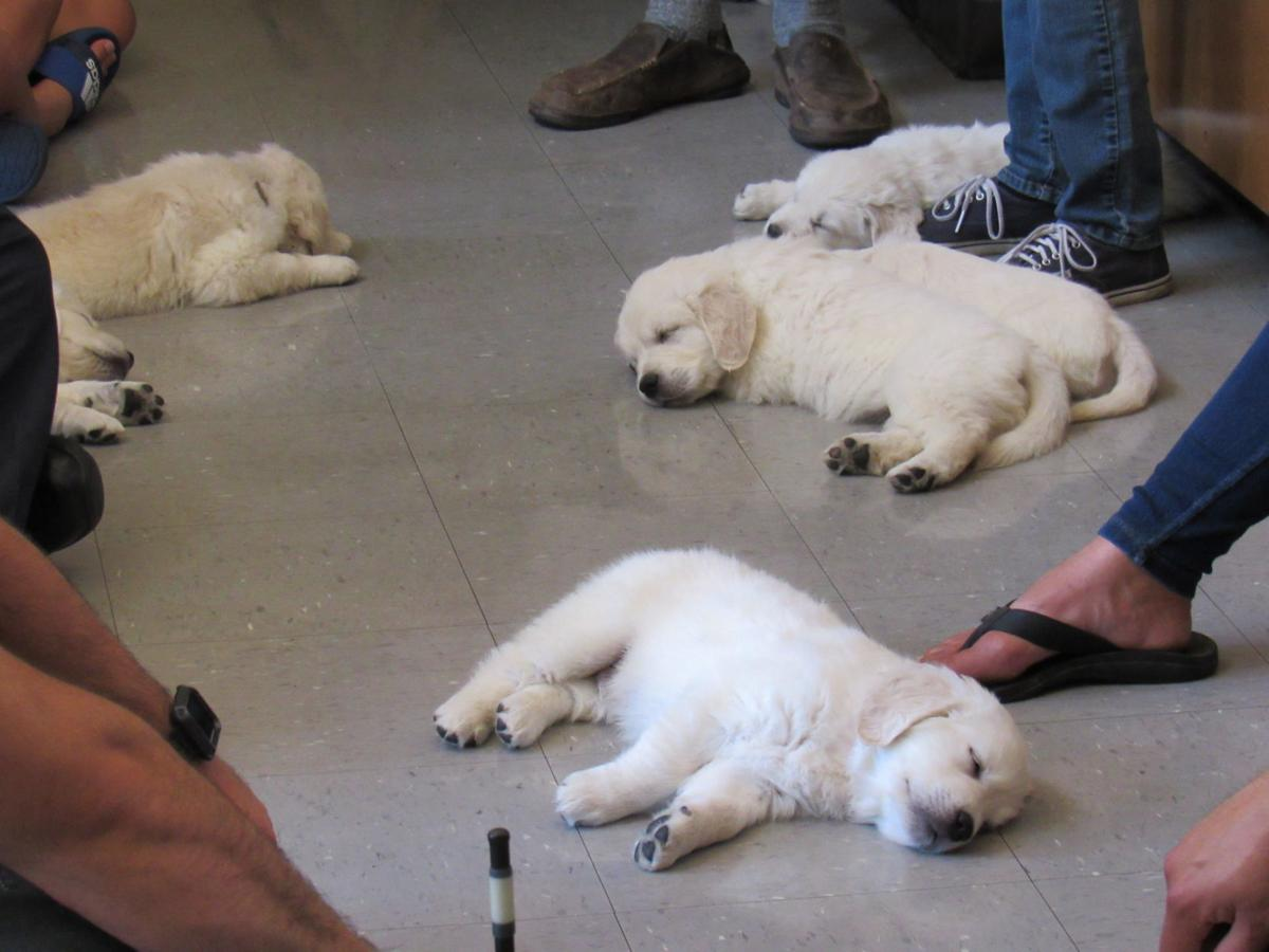Puppies to help firefighters with mental health