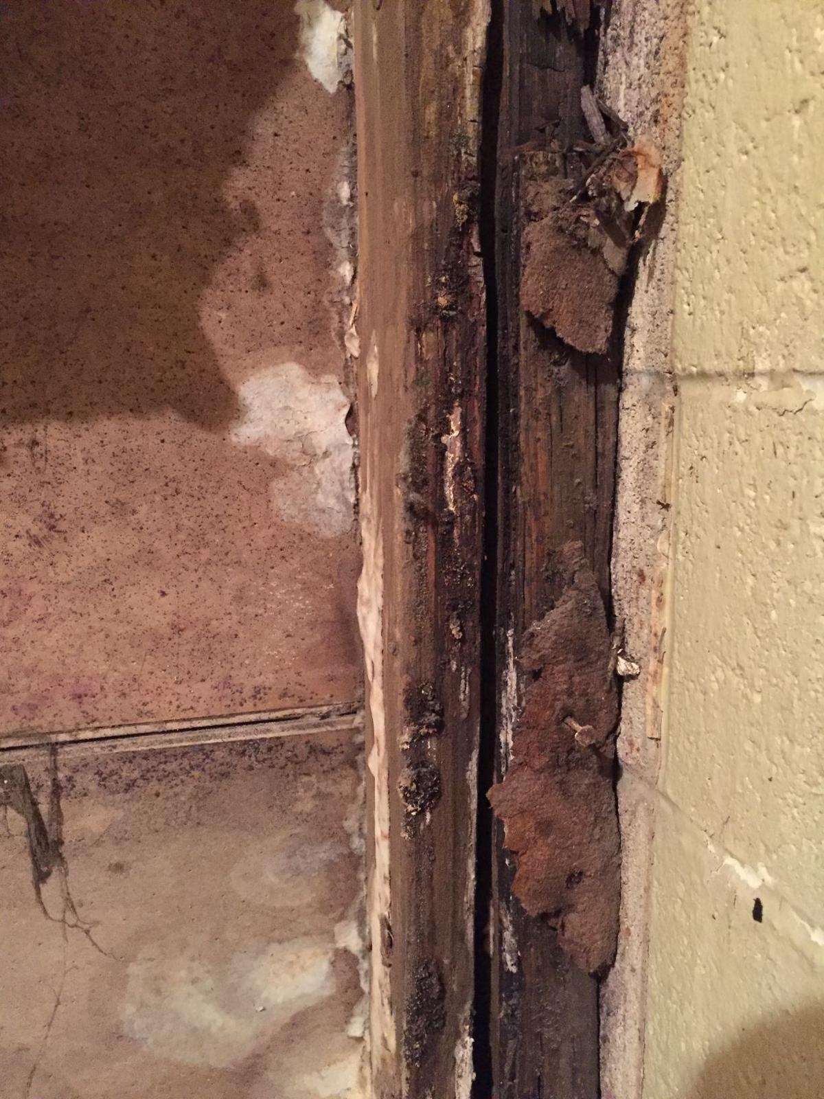 Termites in Hanford PD basement