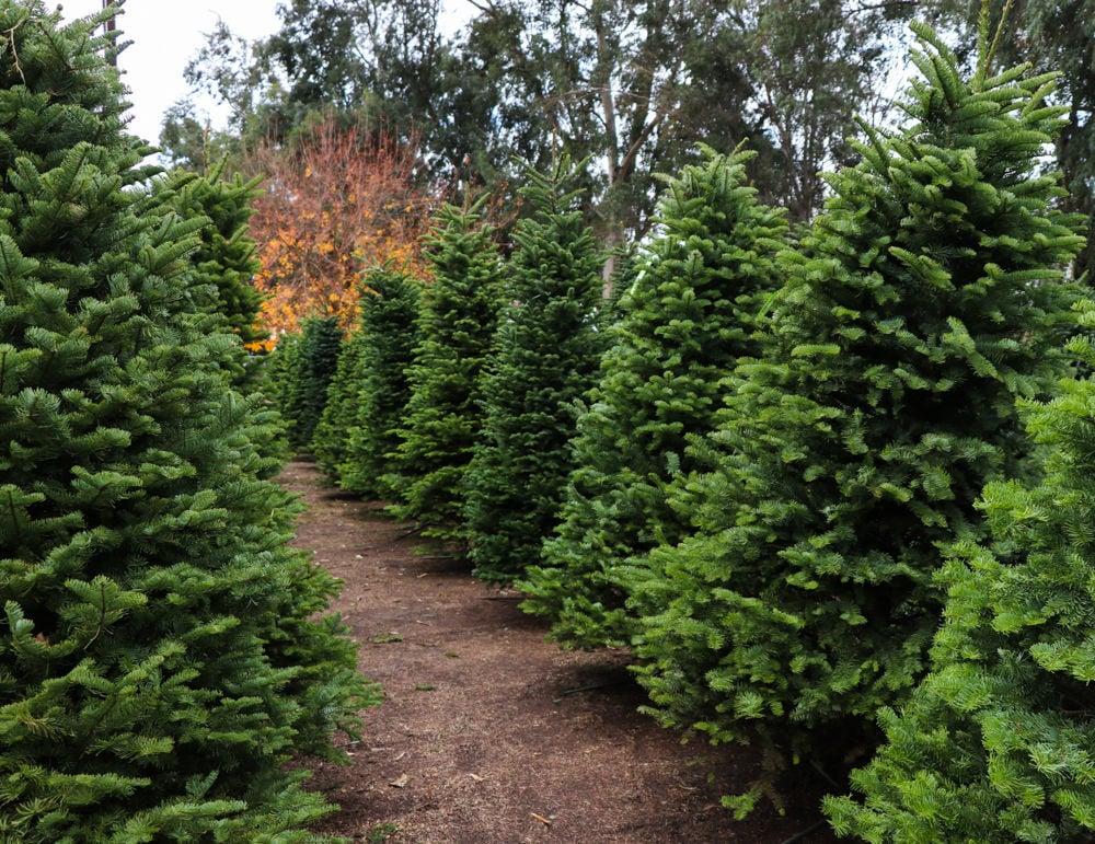 KCFD Christmas Tree lot