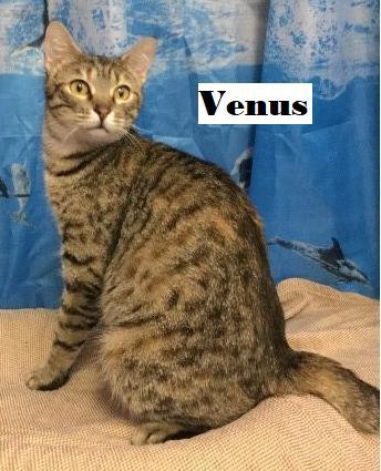 Take me home Venus