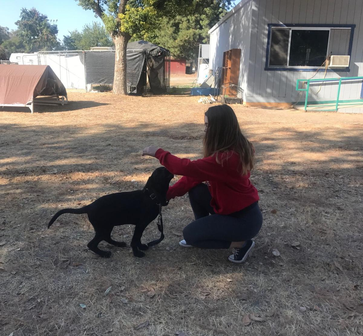 Valley Animal Haven making a PAWsitive change