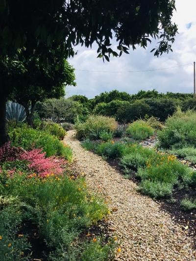 """Native Plants: Our Field of Dreams - """"If You Plant Them, They Will Grow"""""""