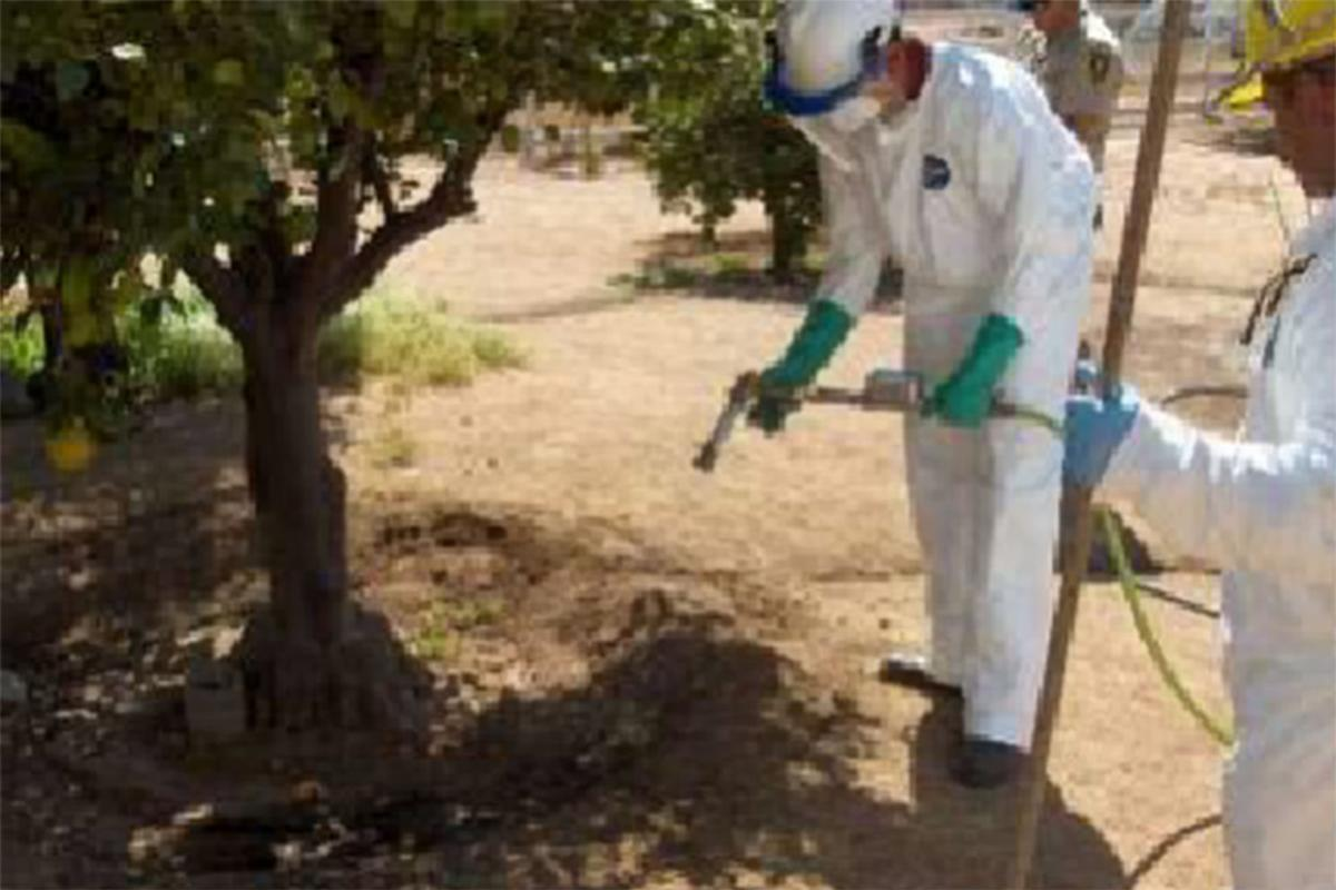 Spraying: Soil treatment