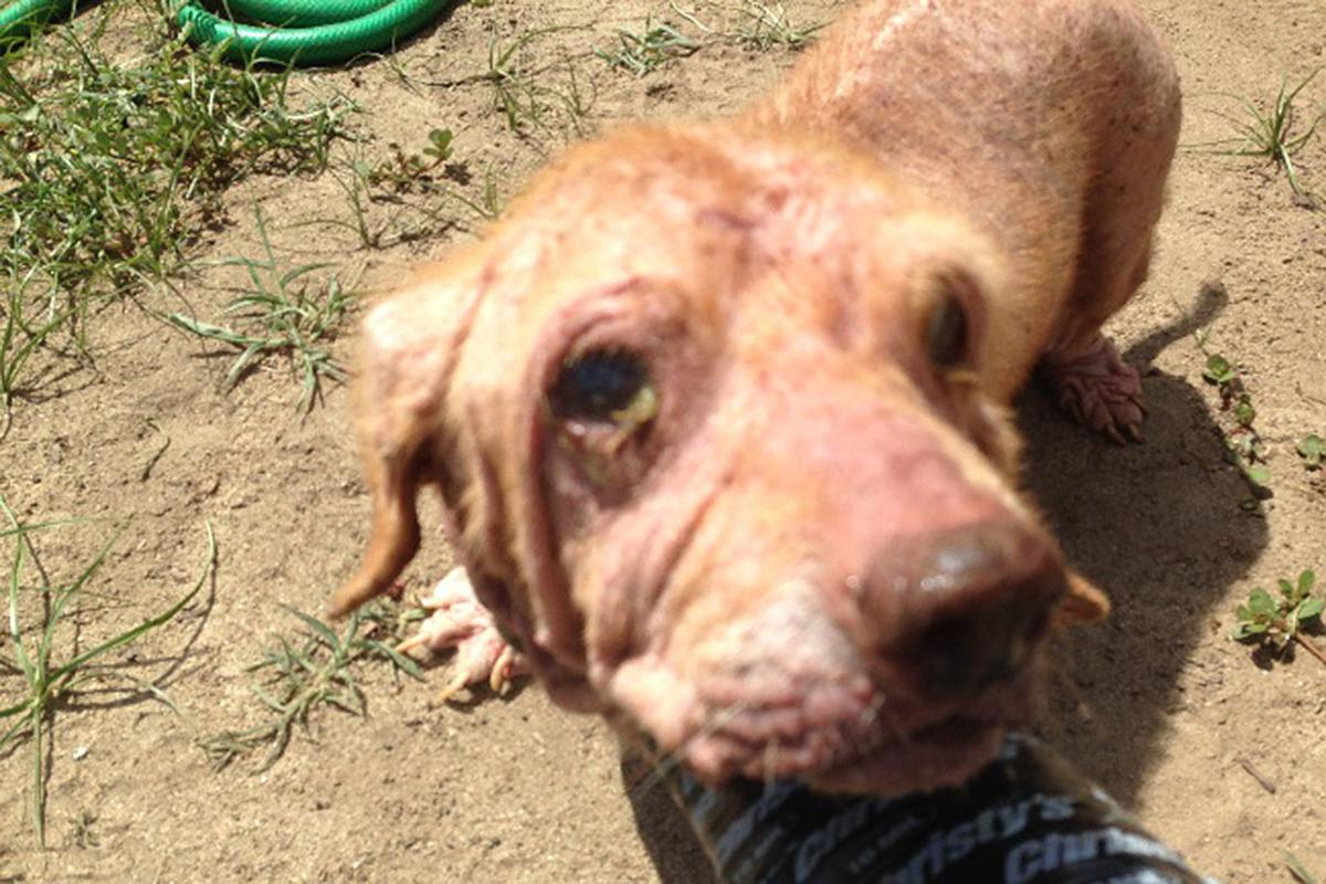 Elder abuse: Abused dogs