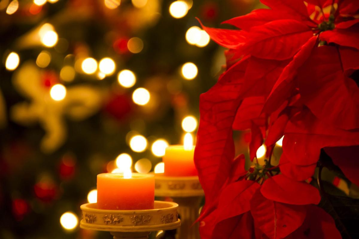 Poinsettias: The perfect holiday plant