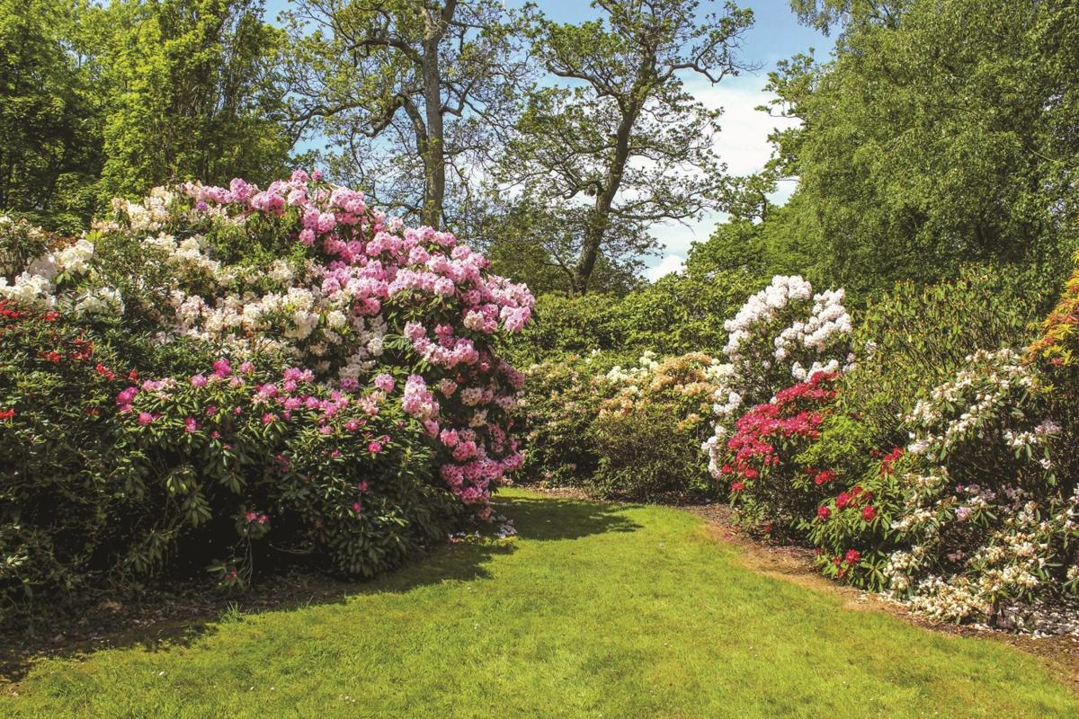 Pruning Spring Blooming Shrubs Features Hanfordsentinel