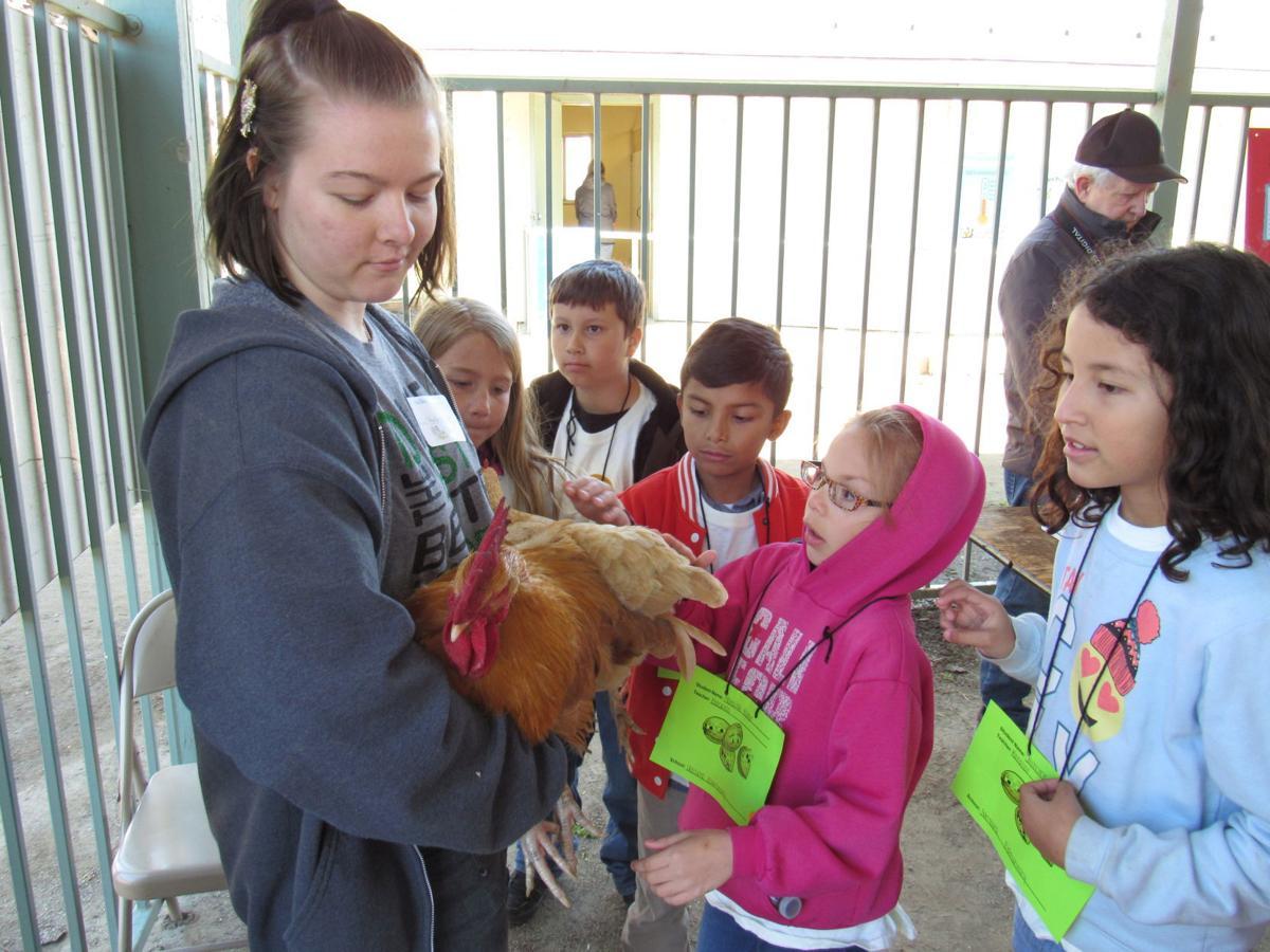 KCFB kids farm day