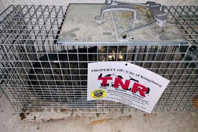 TNR Program: Leave traps in place