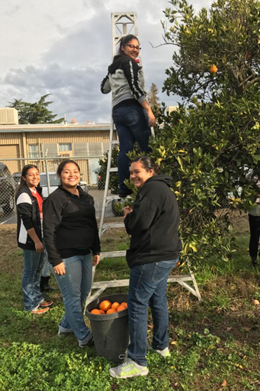 School farm: Up the ladder