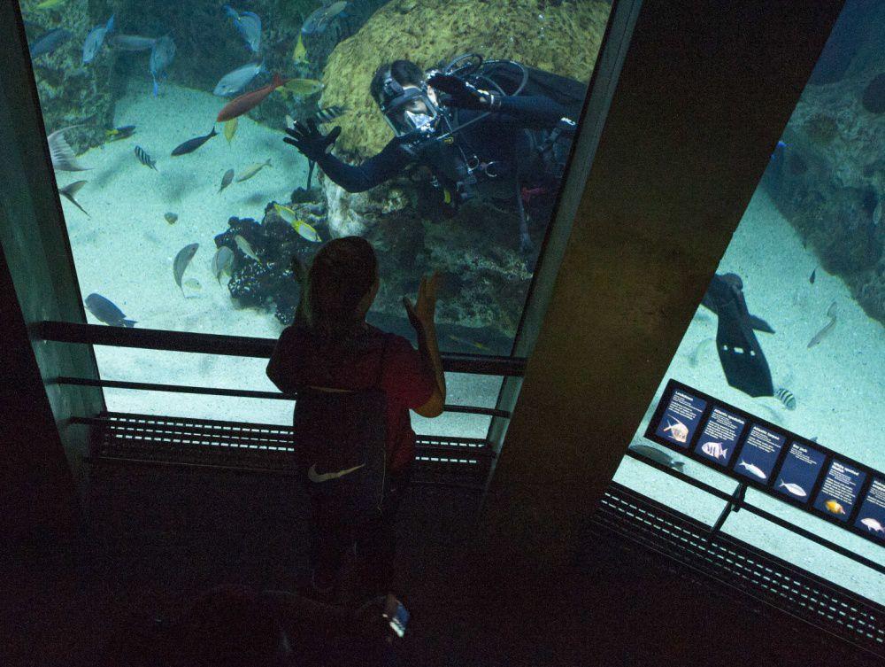 Sailors Dive Into National Aquarium Exhibits