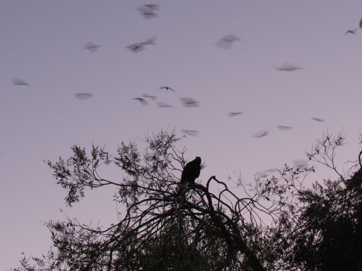 Hawk program