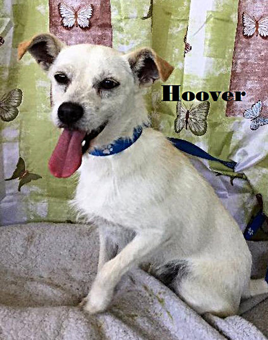 Take me home Hoover