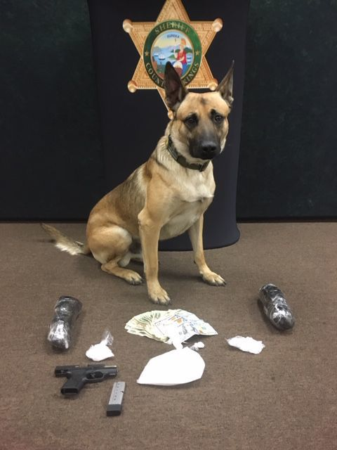 Sheriff K9 bust