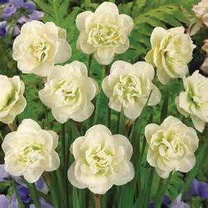 Master Gardener: Plant bulbs now for spring blooms
