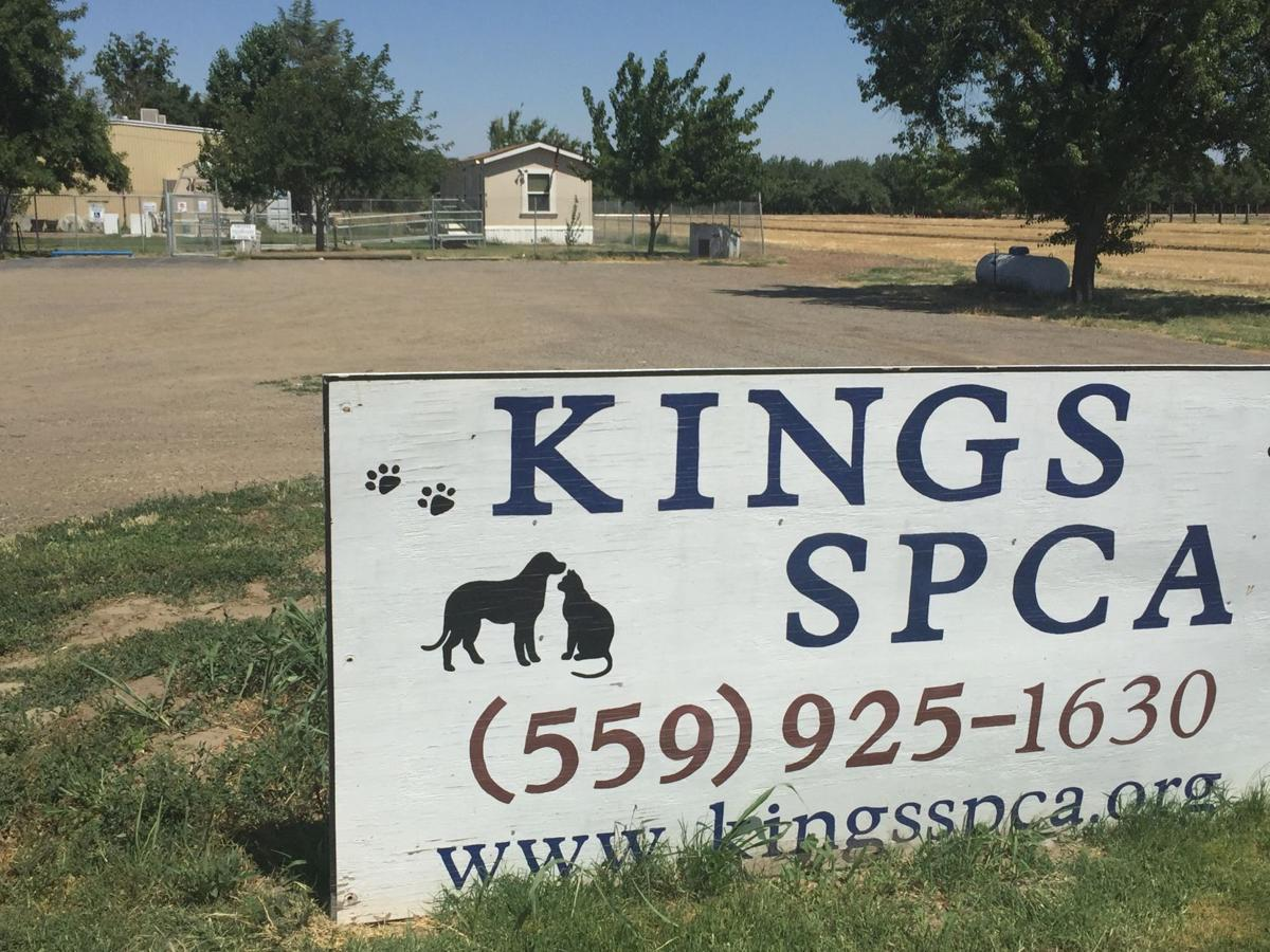 Kings SPCA