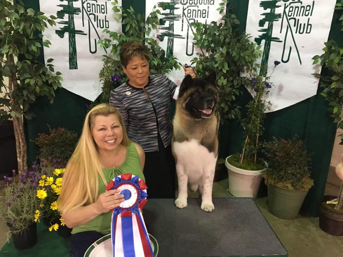 Dog Show - Nik the Akita, Best in Show winner