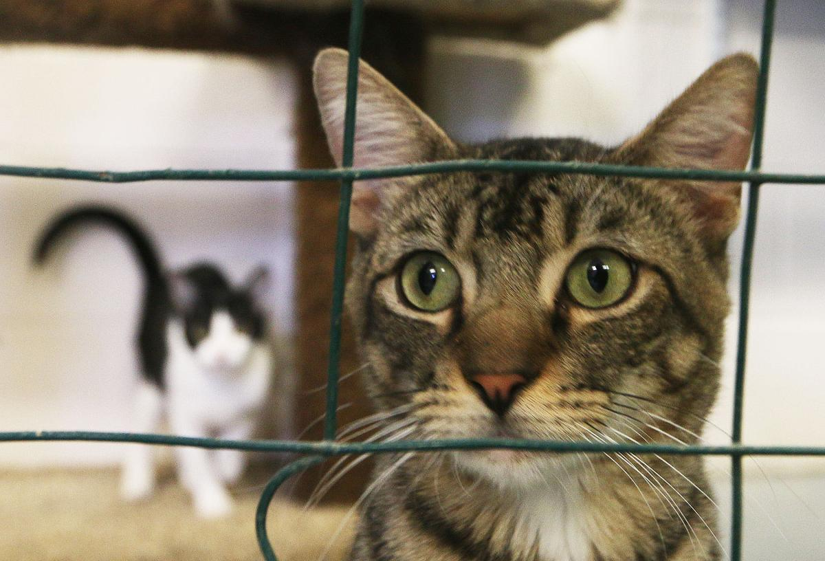 Stray cat at your home? Animal control charges to accept cats ...