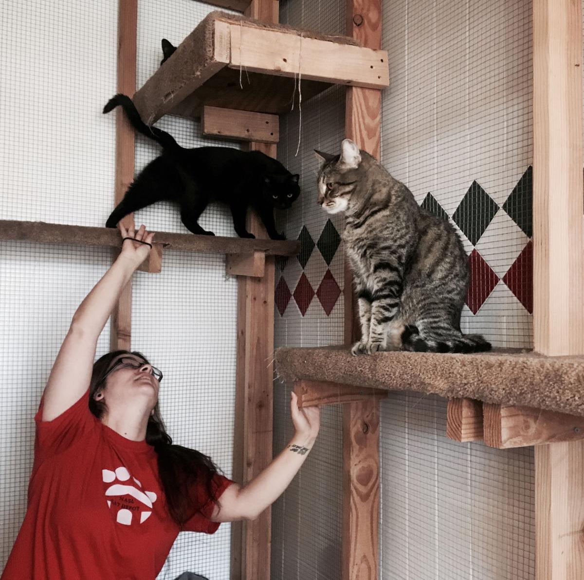 NASL Cat Depot
