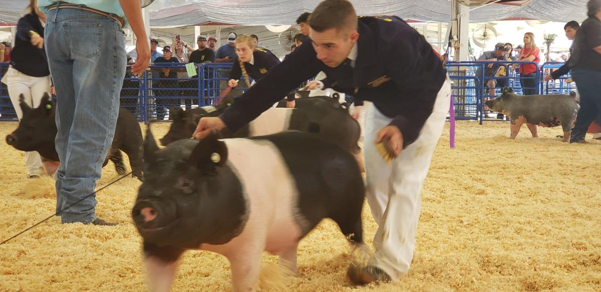 kings fair livestock 2019