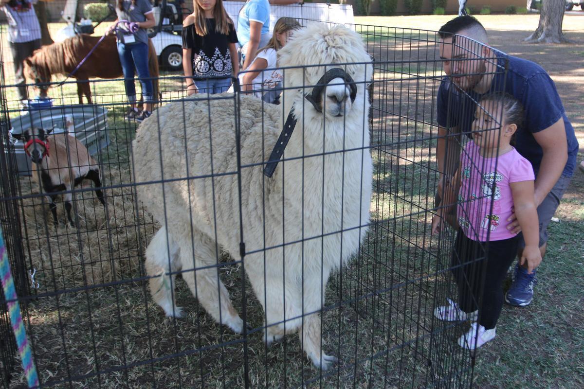 Harvest Moon: Petting zoo
