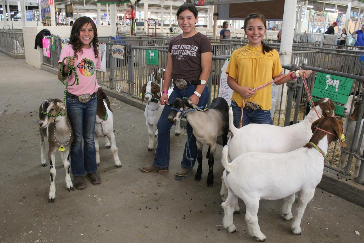 Kingsburg 4H: Readying for auction
