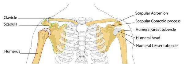 Shoulderpt1