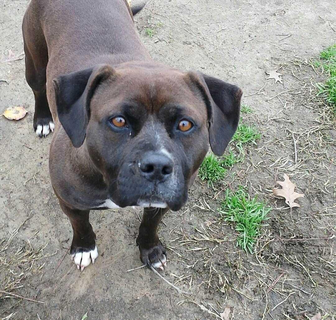 Take Me Home: Second Chance Animal Shelter   Selma Enterprise