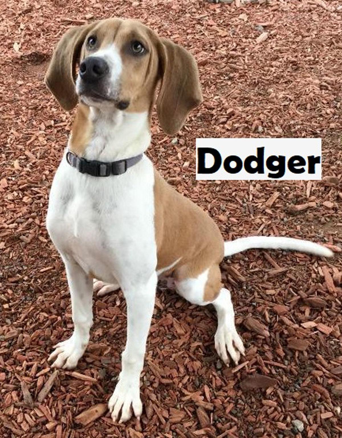 Take me home Dodger