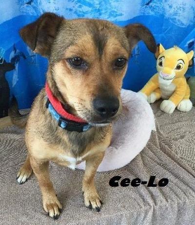 Take me home CeeLo