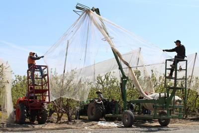 Farm Bureau: Worker shortage