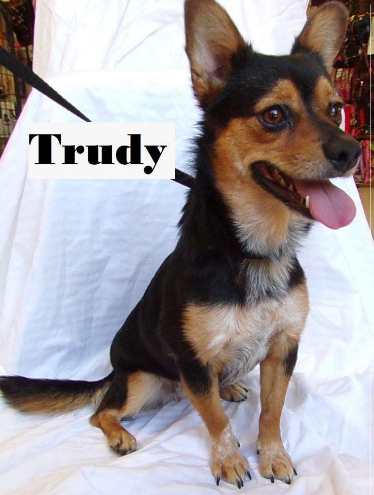 Take me home Trudy
