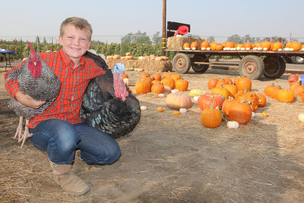 Young farmer: Turkeys and chickens and pumpkins