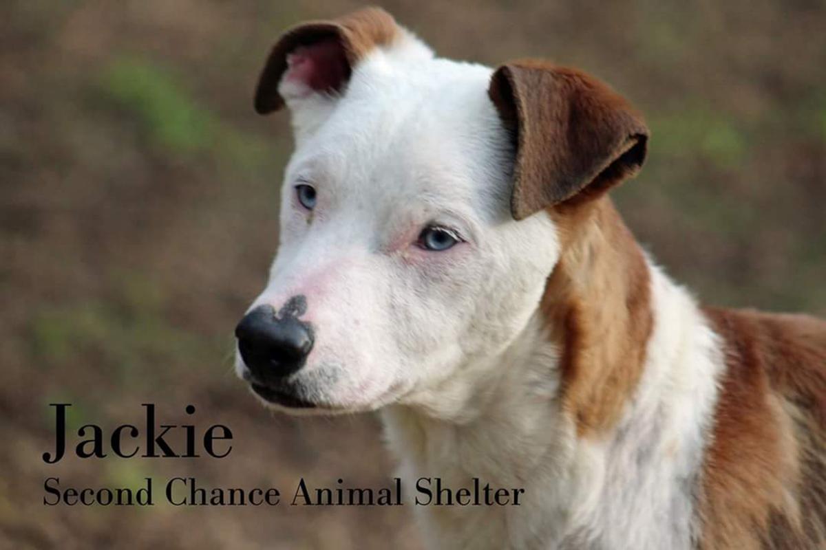Take me home Jackie