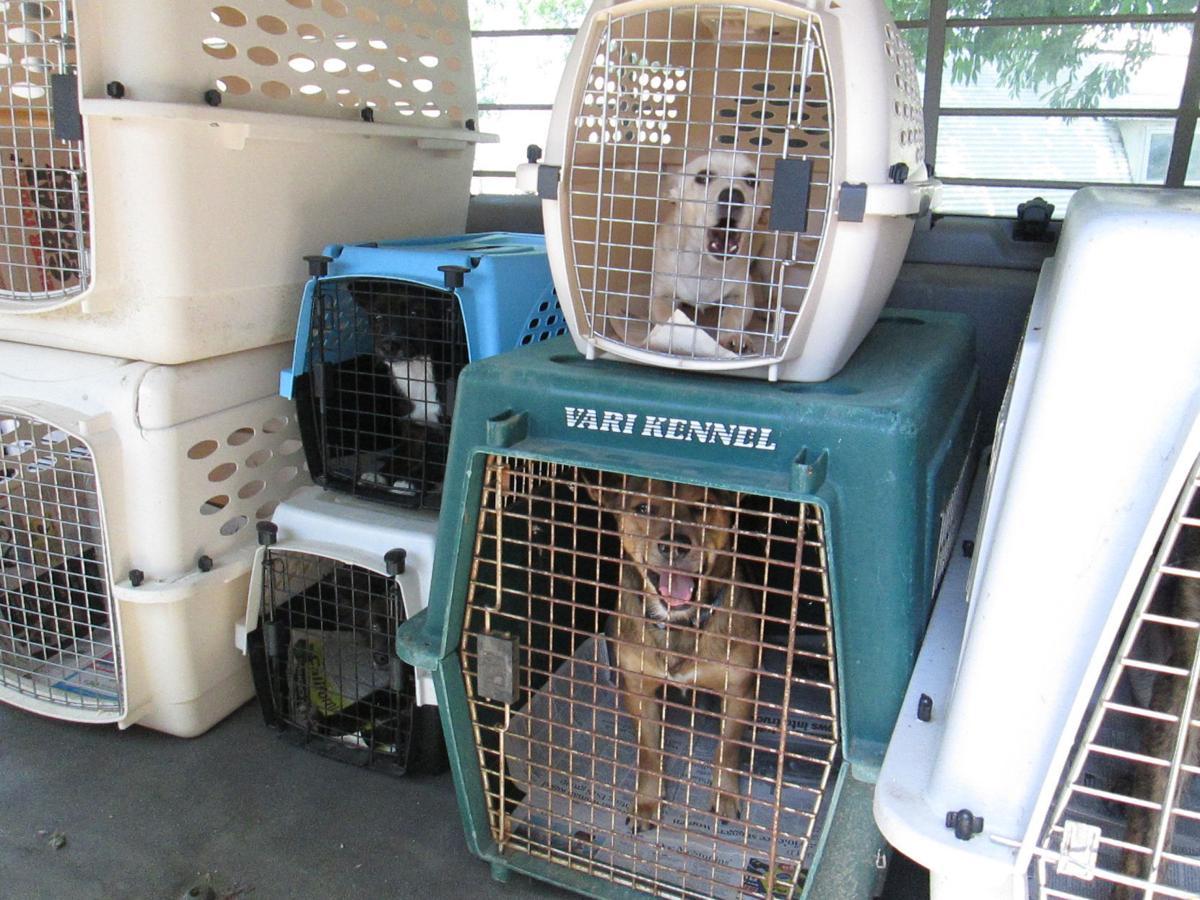 van dogs SPCA