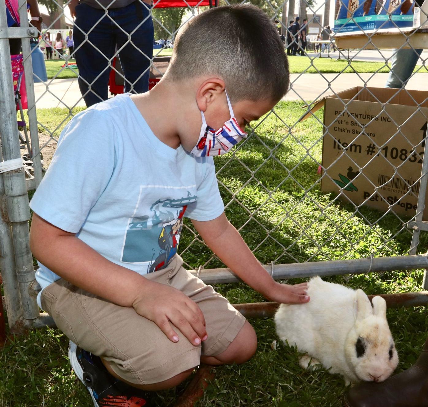 autism awareness bunny