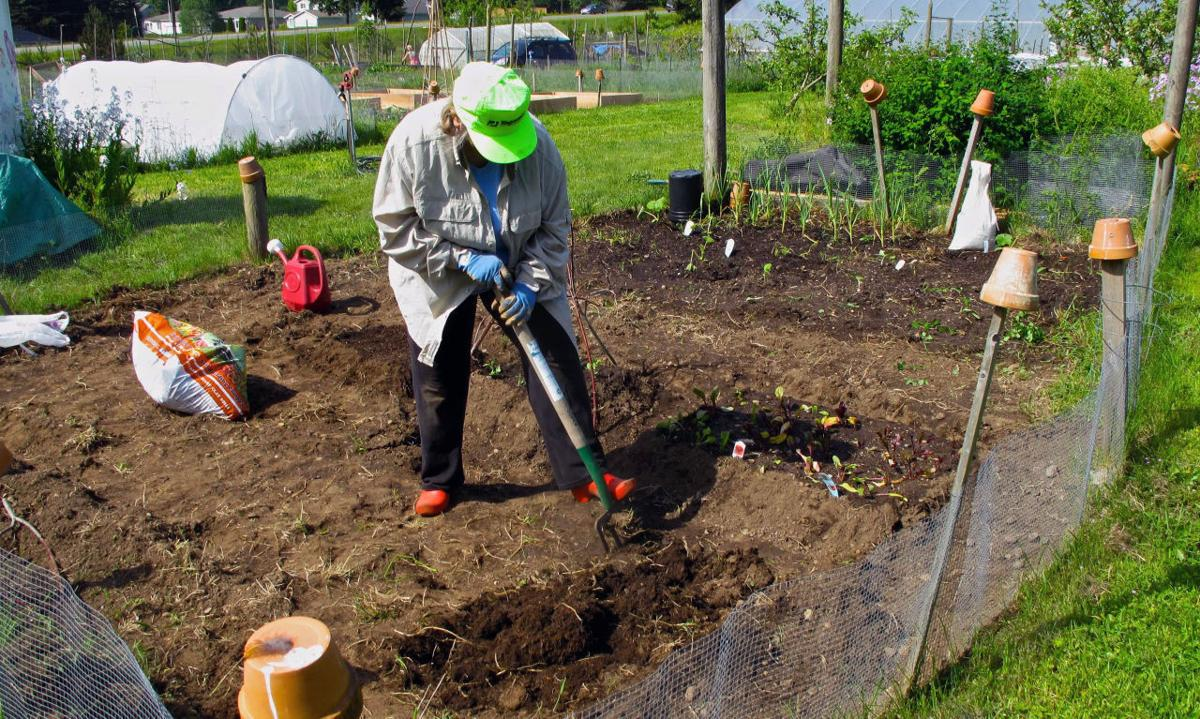 To fertilize or not to fertilize your garden? | Features ...