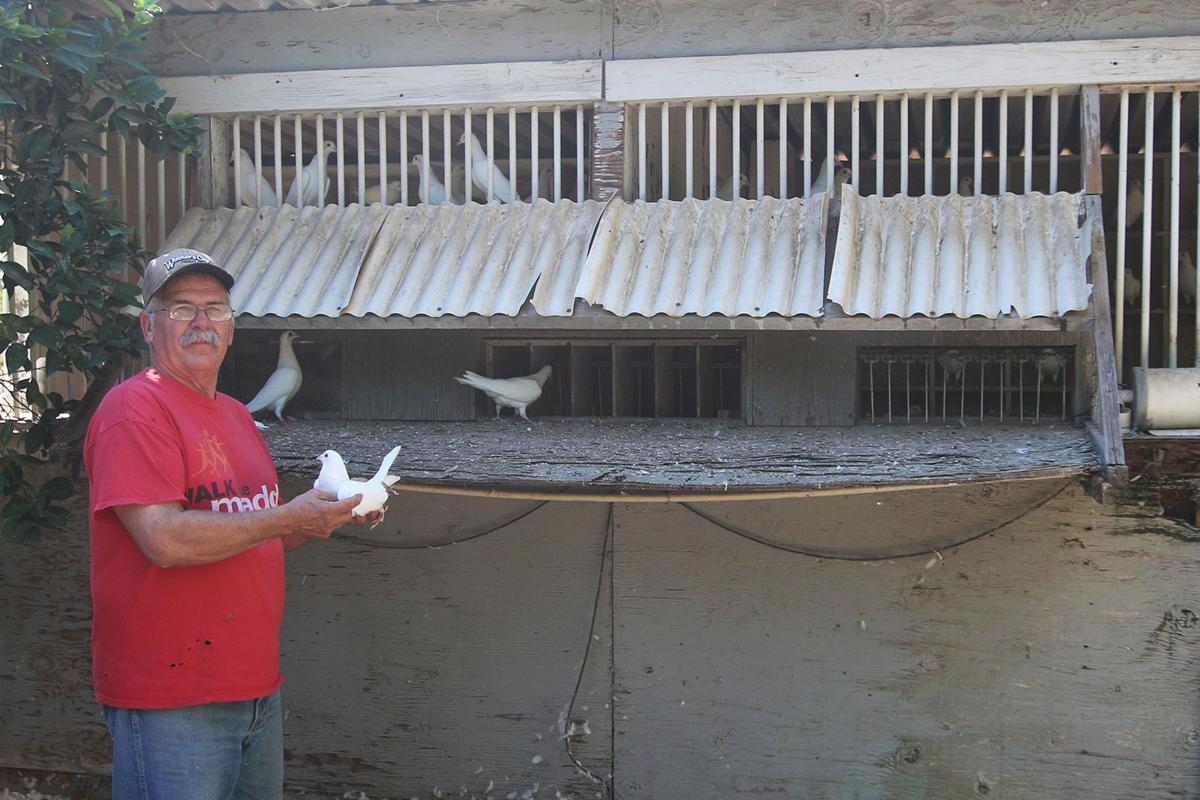 Pigeon: Ken Larrey
