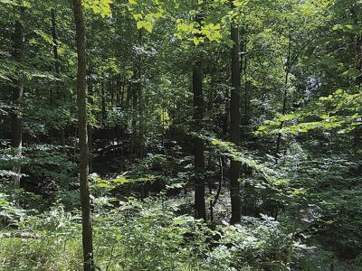 2 25 Sugarwood Forest scene