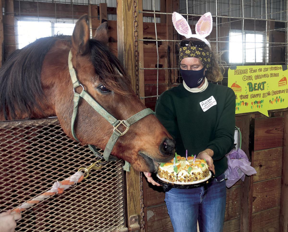4 1 Eggs Horses A1 Bert Cake