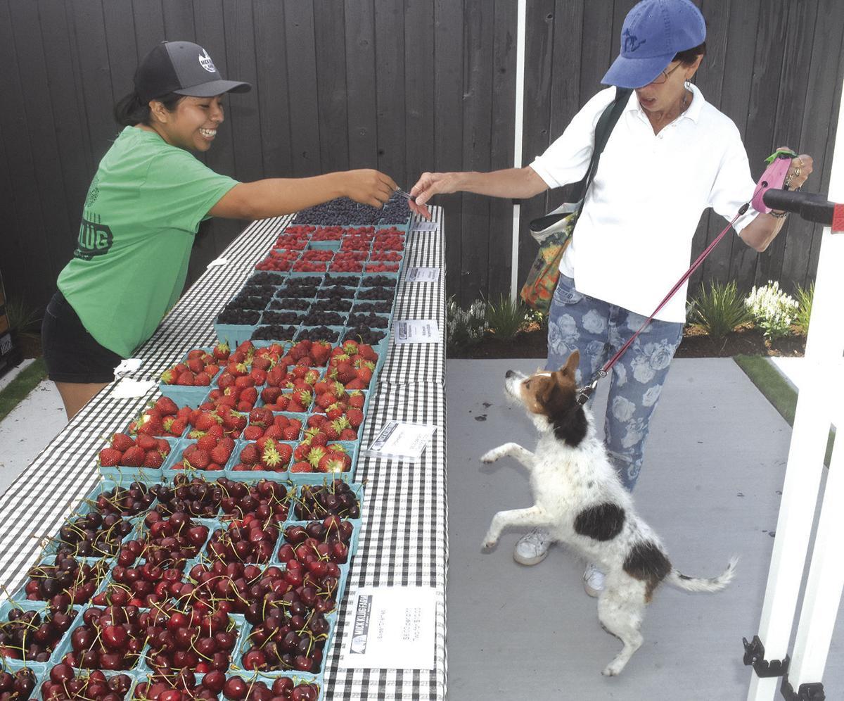 7 8 Klug Farmstand 1 Dog.jpg