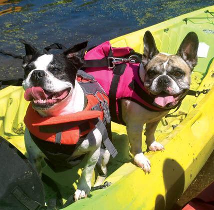 8 28 WEB Beaches 2 NB Kayak Dogs.jpg