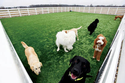 Welcott Farm a haven for local dogs and goldens rescued in Turkey