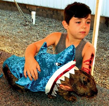 8 23 Fair 1 Rabbit Shark.jpg