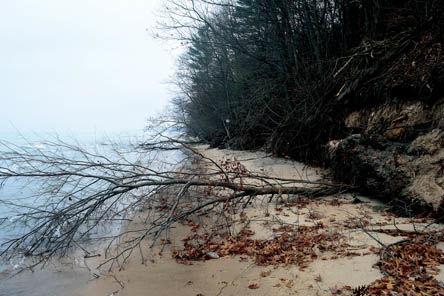 12 27 wEB 2 Chik Beach tree down.jpg