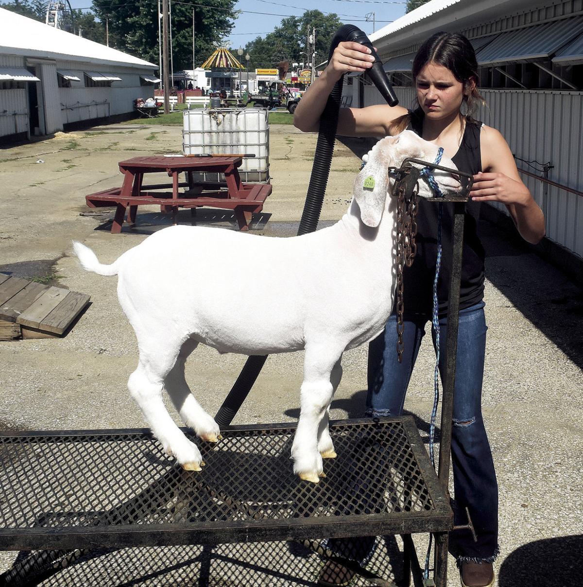 8 19 A1 Fair 1 Goat Drier.jpg